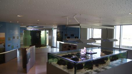 Ausstellung Aquarien