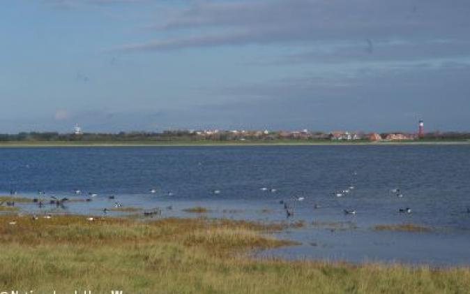 Wangerooge und die Zugvögel